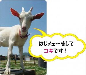 ブログ_ユキ1