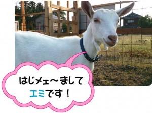 ブログ_エミ1