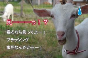 ブログ_ユキえーーー!?