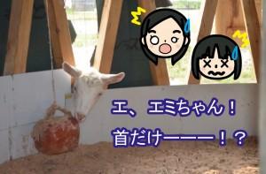 ブログ_エミ首